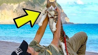 Tech CEO Found A Peculiar Way To Travel With His Cats by Did You Know Animals?