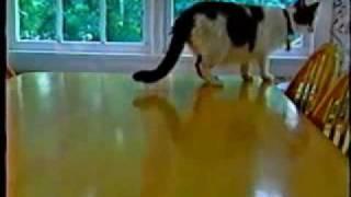 CAT'S MIND