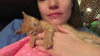 Cuddling with my Baby Kitten Nutmeg!