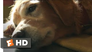 A Dog's Purpose (2017) - Bailey Passes On Scene (4/10) | Movieclips