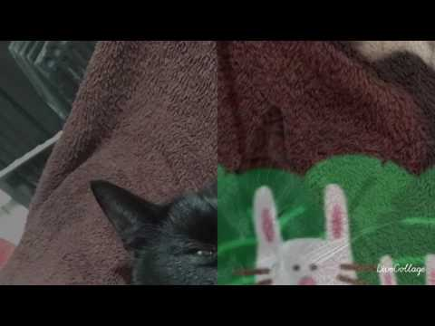 Video I love my story animals xxxx download in MP3, 3GP, MP4, WEBM, AVI, FLV January 2017