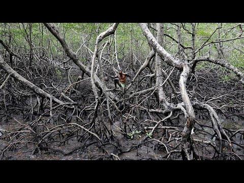 I-React: Καιρός να εκσυγχρονιστεί η αντιμετώπιση φυσικών καταστροφών…