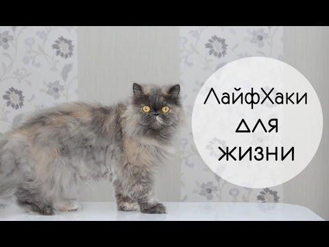 5 ЛайфХаков для жизни    Как избавиться от неприятного запаха изо рта - DomaVideo.Ru