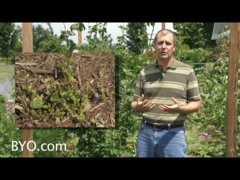 Growing Hops – Brew Your Own Magazine