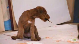 Artistic Irish Terrier Pups | Too Cute! - YouTube
