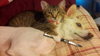Funny Cats And Dogs Part 6 - Funny Cats vs Dogs - Funny Animals Compilation
