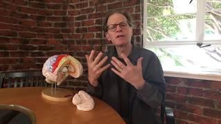 Dr. Dan Siegel's Hand Model of the Brain