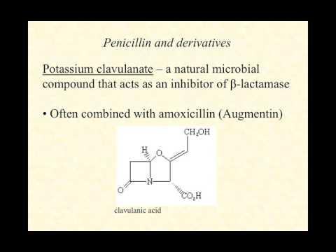video lecture beta-lactams