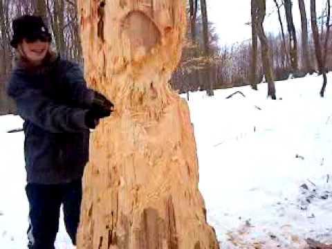 Baum fällt Teil 1