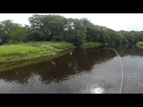 Fly fishing for Chub (видео)