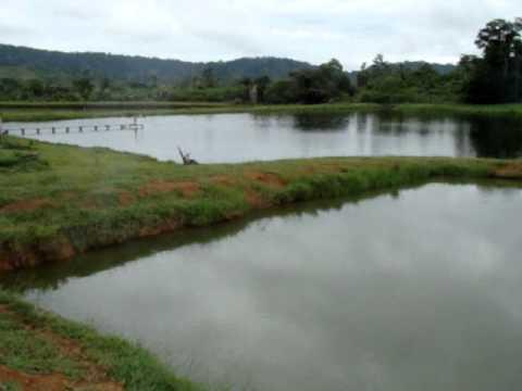 Sítio do Adauto, Mirante da Serra, Rondônia