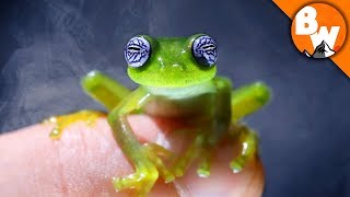 Do You Believe in Ghost Frogs? by Brave Wilderness
