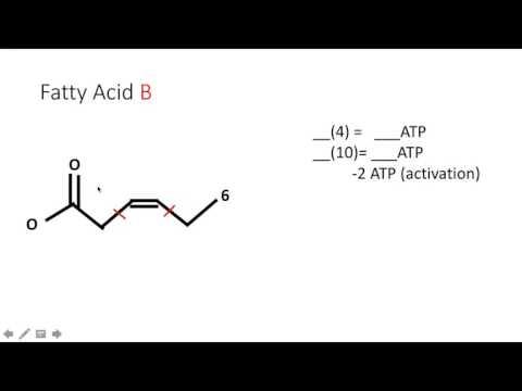 Beta Oxidation ATP Count Explained