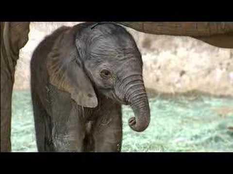 0 Baby Elephant