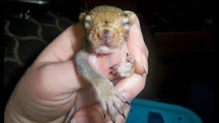 They Saved A Baby Squirrel, 8 Years Later She Returns With A Gift Of Her Own by Did You Know Animals?