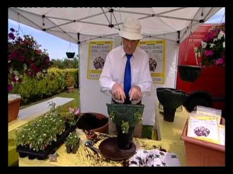 Hanging basket demonstration. Planting up and growing a hanging basket with trailing plants.