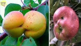 Video Unusually shaped fruits and vegetables that look like other things MP3, 3GP, MP4, WEBM, AVI, FLV Oktober 2018