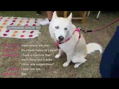 The Crane Couple Live! World Dog Day in Hollywood