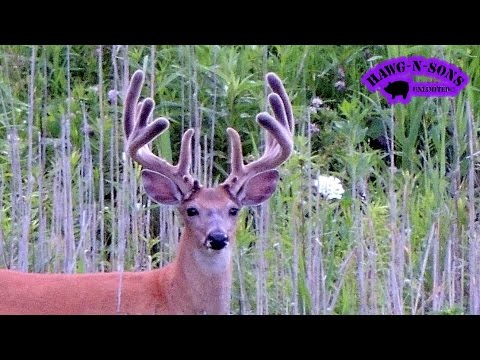 2014 July 11-15  – Deer Hunting – BIGGEST Whitetail Velvet Bucks