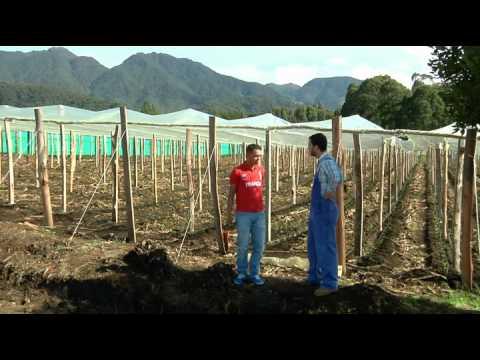 Escuela de campo: Construcción de semi invernadero para cultivo de tomate - 17 de septiembre