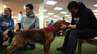 Clarkson University Library Goes To The (Therapy) Dogs During Finals Week
