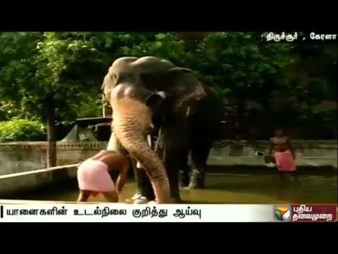 Keralas-Pooram-festival-Elephants-get-ready-to-parade