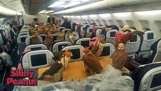 Video Ketika Sultan Naik Pesawat Komersil, Inilah yang Terjadi MP3, 3GP, MP4, WEBM, AVI, FLV Januari 2019