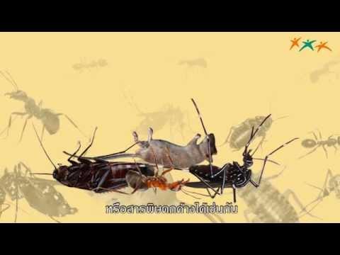สมุนไพรไล่แมลง สัตว์และแมลงต่างๆ ไม่ว่าจะเป็นยุง หนู  ต่างก็มีการแพร่ขยายพันธ์เพิ่มมากขึ้นเรื่อยๆ ทำให้ต้องใช้สารเคมี หรือยาเบื่อไล่แมลงเพื่อตัดปัญหา แต่สารเบื่อฆ่าแมลงถึงแม้จะช่วยแก้ปัญหาได้อย่างรวดเร็ว แต่ก็ทำให้ร่างกายเสี่ยงต่อการได้รับสารพิษ หรือสารพิษตกค้างได้เช่นกัน   ..รอบรู้สร้างสุขขอนำเสนอพืชผักสมุนไพรที่หาซื้อได้ง่าย แต่ช่วยไล่แมลงมาฝากค่ะ