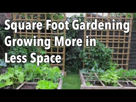 gardening - If you don't have a lot of time available to weed, water and maintain your vegetable garden, then efficient gardening techniques such as Square Foot Gardenin...