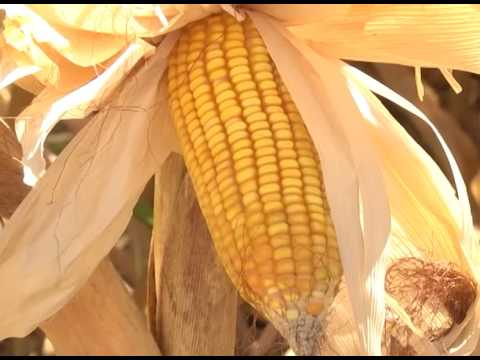Aumento dos combustíveis podem afetar o bolso do produtor rural
