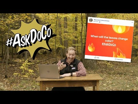 When will the leaves change color? #AskDoCo