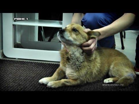 Чи потрібно робити тваринам УЗД діагностику та рентгенографію? [ВІДЕО]