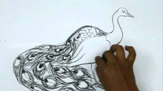 Видео: как рисовать павлина с большим хвостом