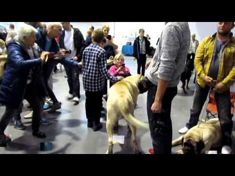 POZNAŃ INTERNATIONAL POLAND WINNERS DOG SHOW 08.11.2015