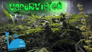 Reworking the Cannabis Grow Rooms! � by VaderVision