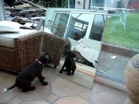 Cachorro vs. Espejo