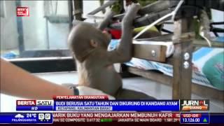 Video Bayi Orangutan Budi Mulai Bisa Makan Sendiri MP3, 3GP, MP4, WEBM, AVI, FLV Februari 2019