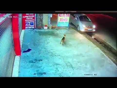 Đi ô tô câu trộm chó =)) - Thời lượng: 33 giây.