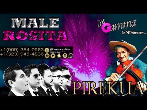 Male Rosita - Los Gamma - Pirekua