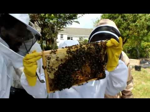 Spring Honey Bee Hive Inspection – Iveragh Beekeepers Association – Two