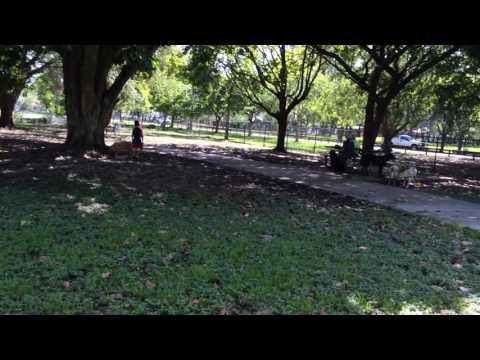 Miami Dog Park Tropical Park Review