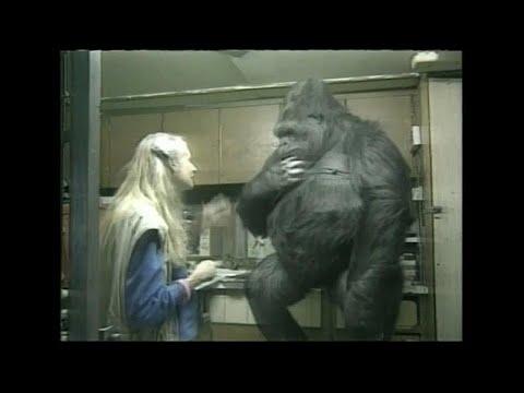 San Francisco/USA: Gorilla-Dame starb mit 46 im Zoo ...