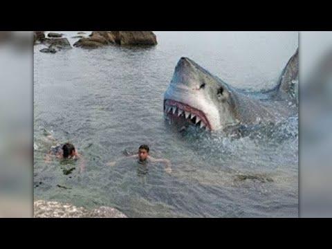 Ils n'avaient pas vu le requin...