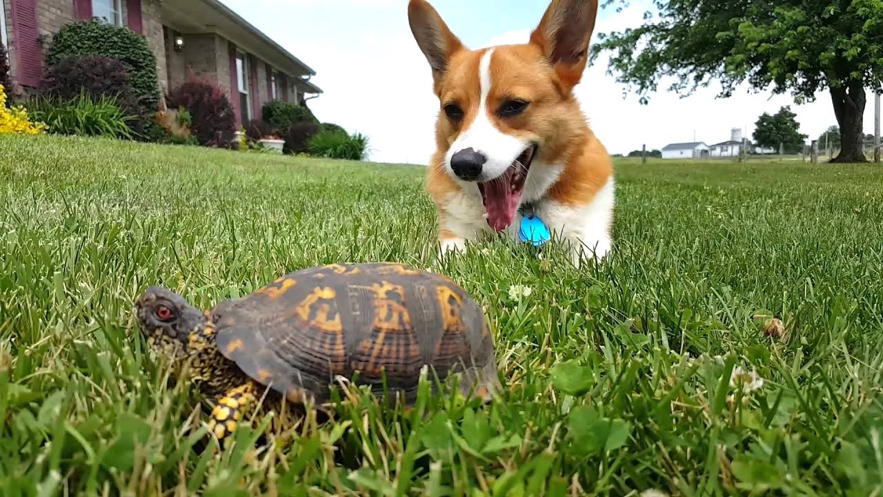 Turbo and the turtle