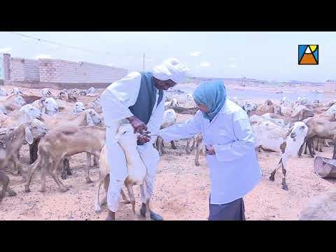 مجهودات محفظة قوت العاملين بولاية الخرطوم