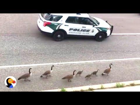 le-oche-scortate-dalla-polizia