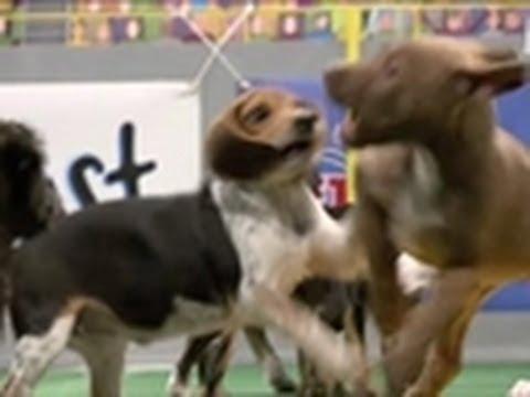 Puppy Bowl IV: Puppy Politics
