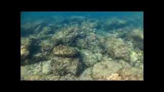 Snorkeling au Cap Rousset