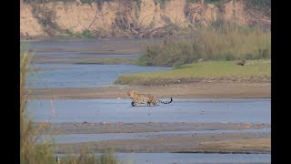 Wildlife Photography - In search of Big Cats, Chitwan National Park, Nepal
