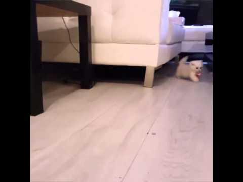 maly-kotek-i-jego-smoczek